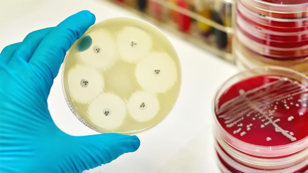 проблемма бактерий