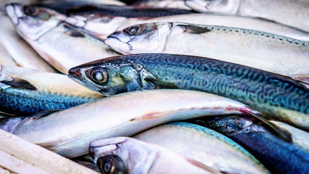 рыбы и морепродукты
