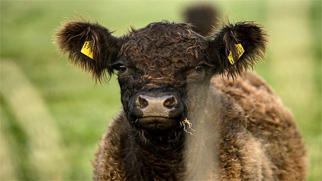 Обзор экспорта говядины изЮжной Америки