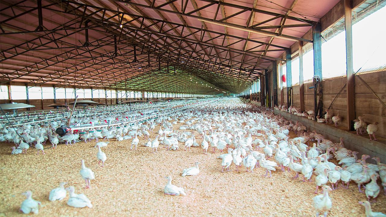 Новая птицефабрика появится вУльяновской области