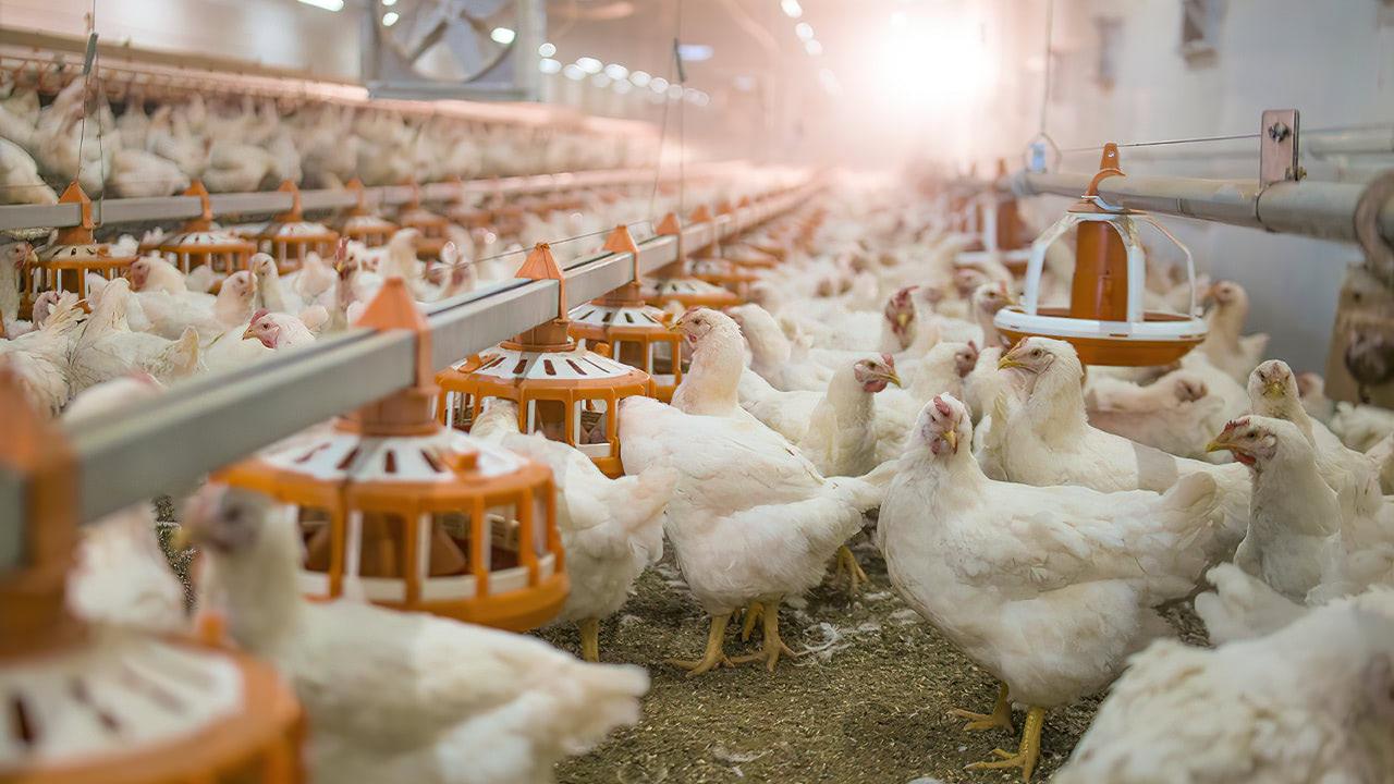 Ставрополье заняло 3 место вРоссии поэкспорту мясной продукции